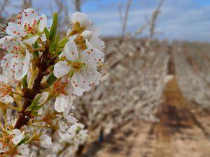 productos agrícolas murcia
