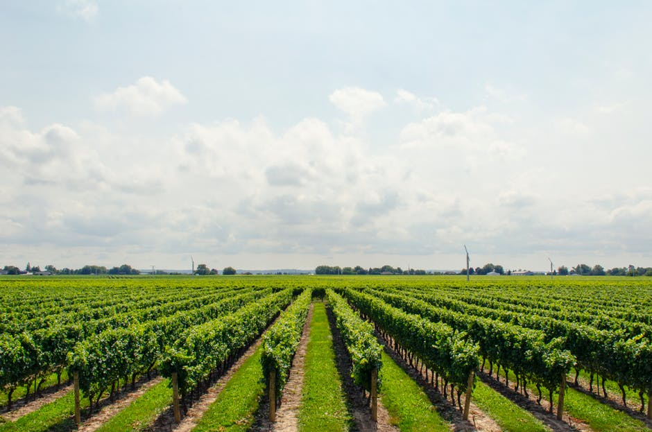 asesoramiento técnico agrícola murcia