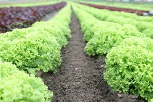 fertilizantes y fitosanitarios Murcia